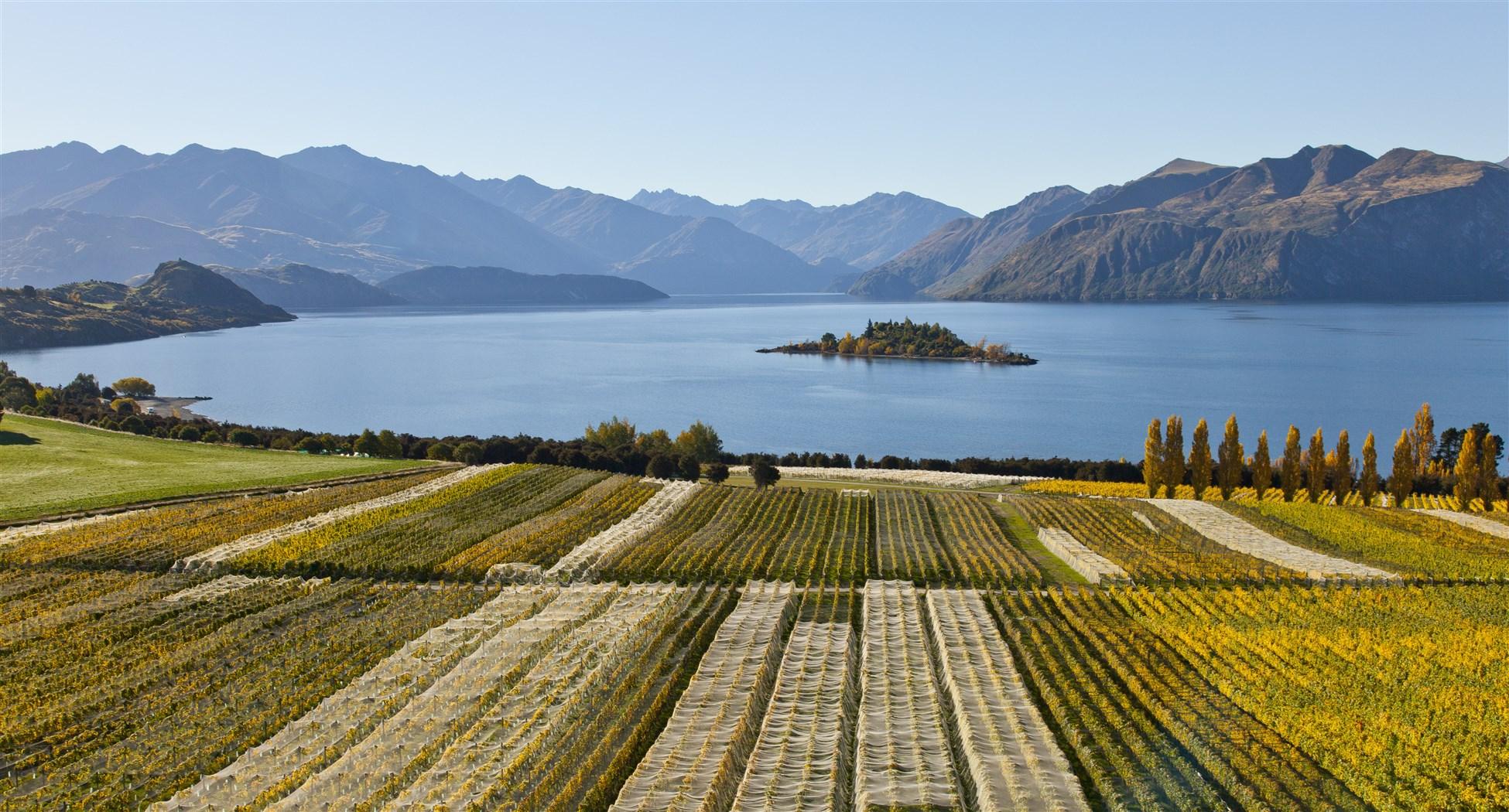 Los viñedos de Nueva Zelanda